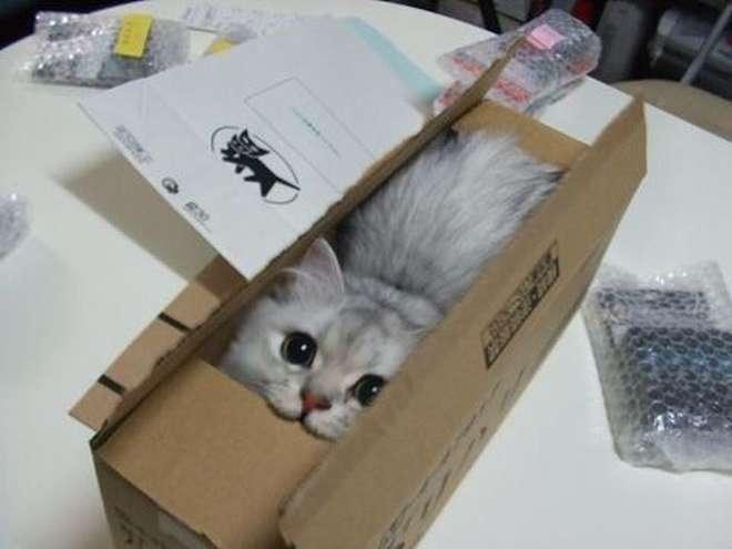 cat101-L.jpg