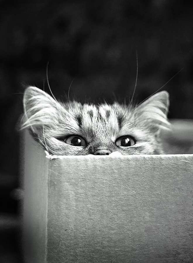 cat28-L.jpg