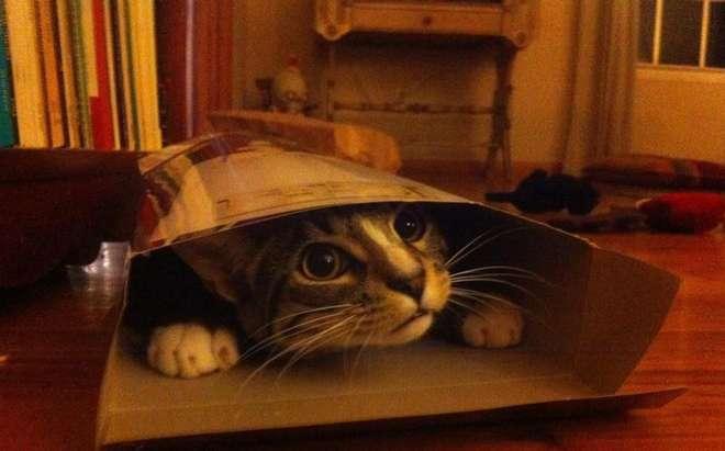 cat42-L.jpg