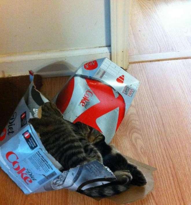 cat62-L.jpg