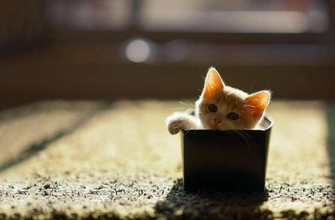 cat82-L.jpg