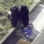 gorillezooenfant2