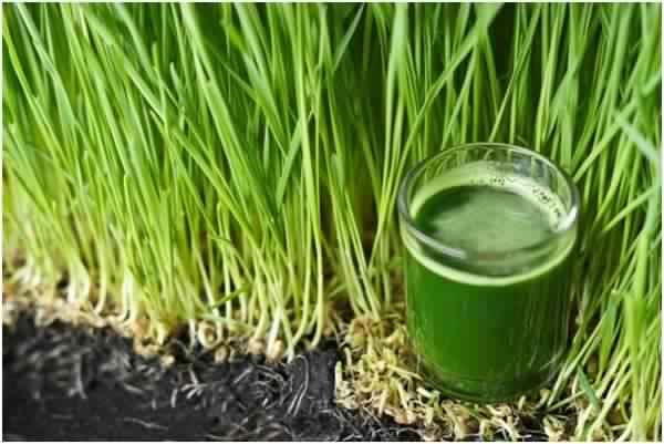 © Santé-Nutrition.org